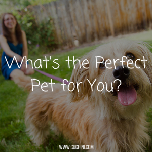 whats-the-perfect-pet-for-you