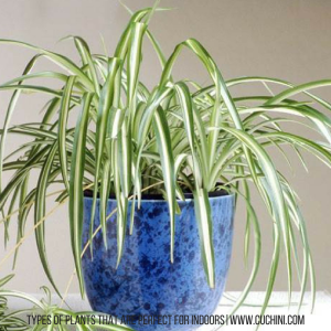 Types of plants that are perfect for indoors